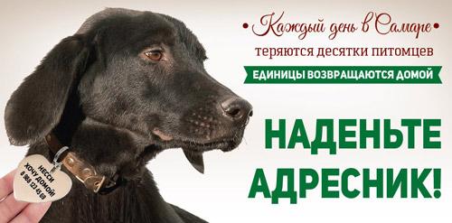 приют собак надежда